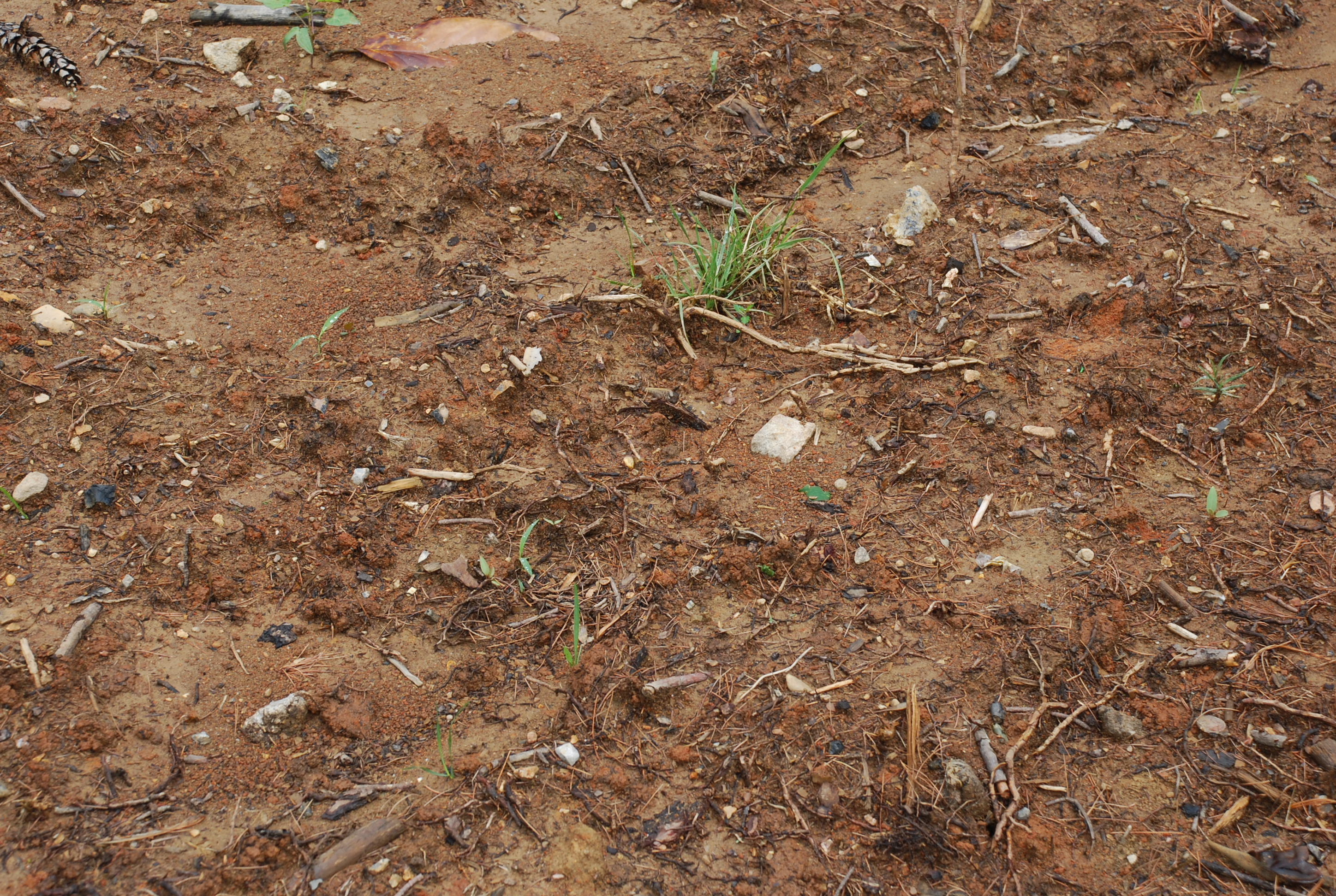 Image gallery poor soil for Where can you find soil