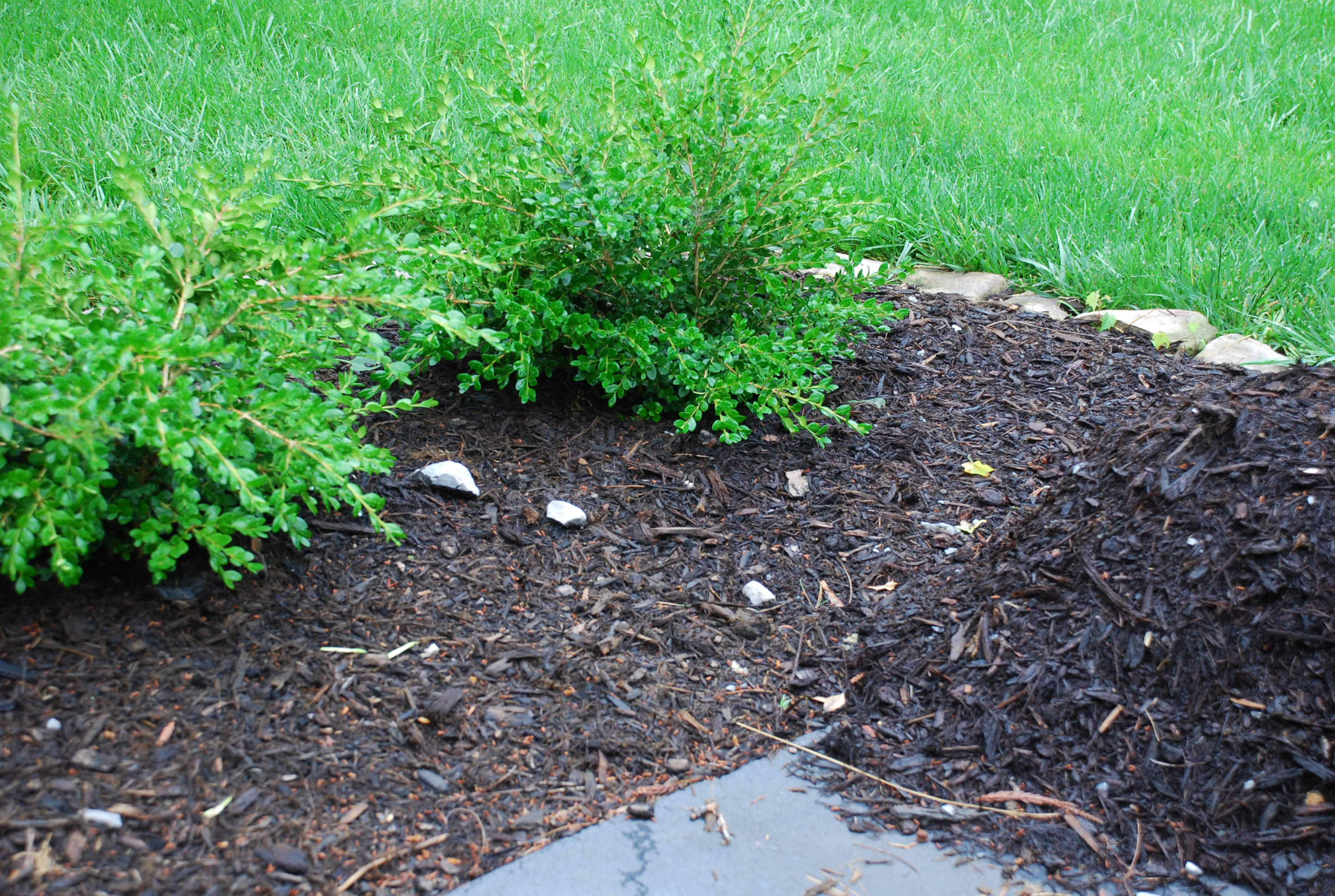 Does Mulch Attract Termites What Grows There Hugh