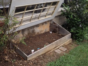 Use covered  cold frame for vegetable storage in winter