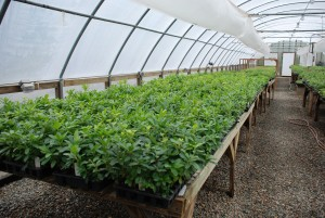 Clean Greenhouse Environment  No! to hose nozzle on floor