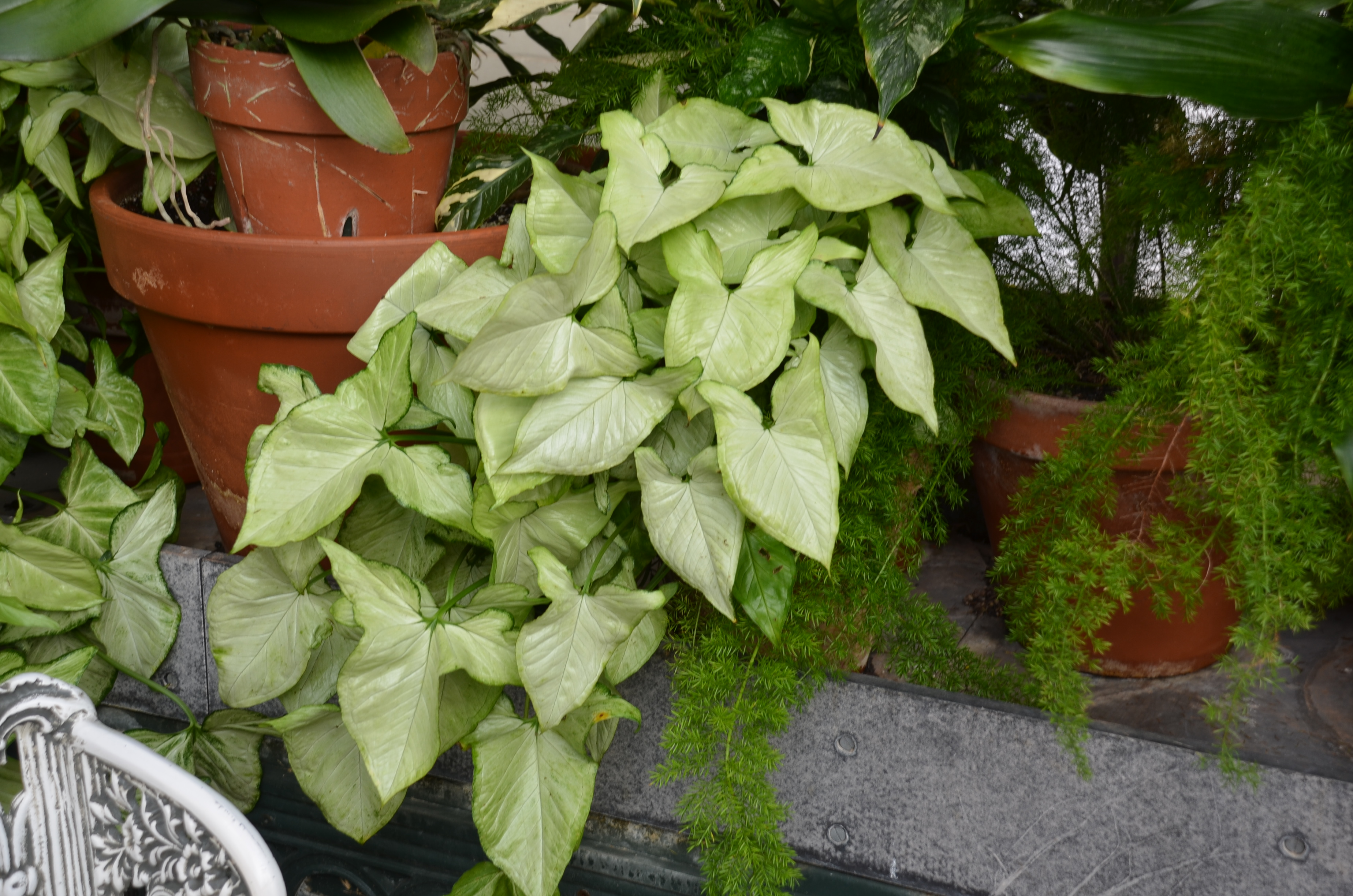 What grows there hugh conlon horticulturalist professor lecturer and gardener - House plants vines ...