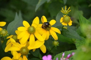 Awareness of Beneficial Insects In Landscape