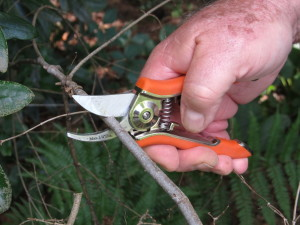 Small Dramm pruner perfect for small 1/4 inch pruning cuts