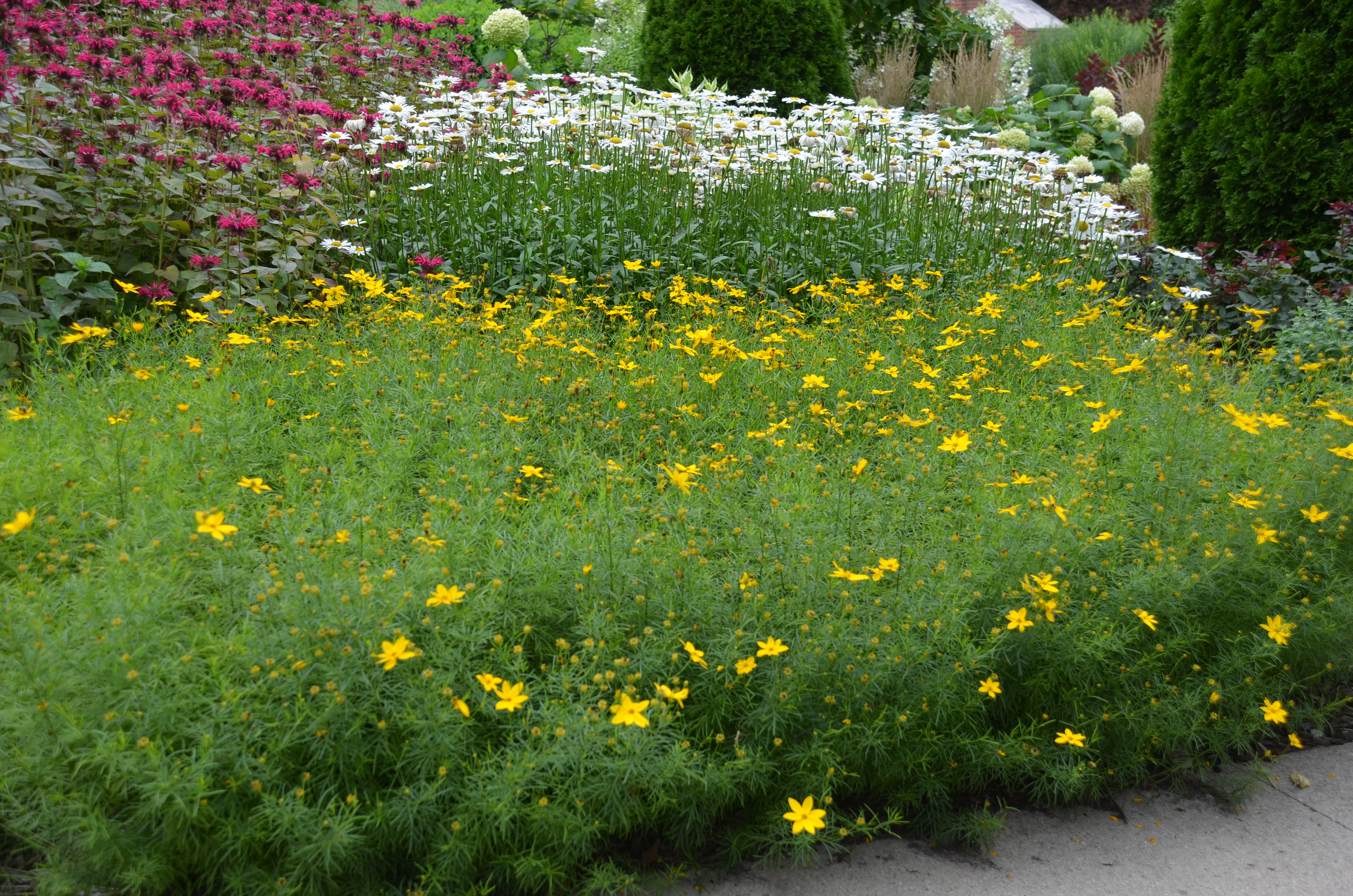 Five Perennial Staples For Your Summer Garden What Grows There