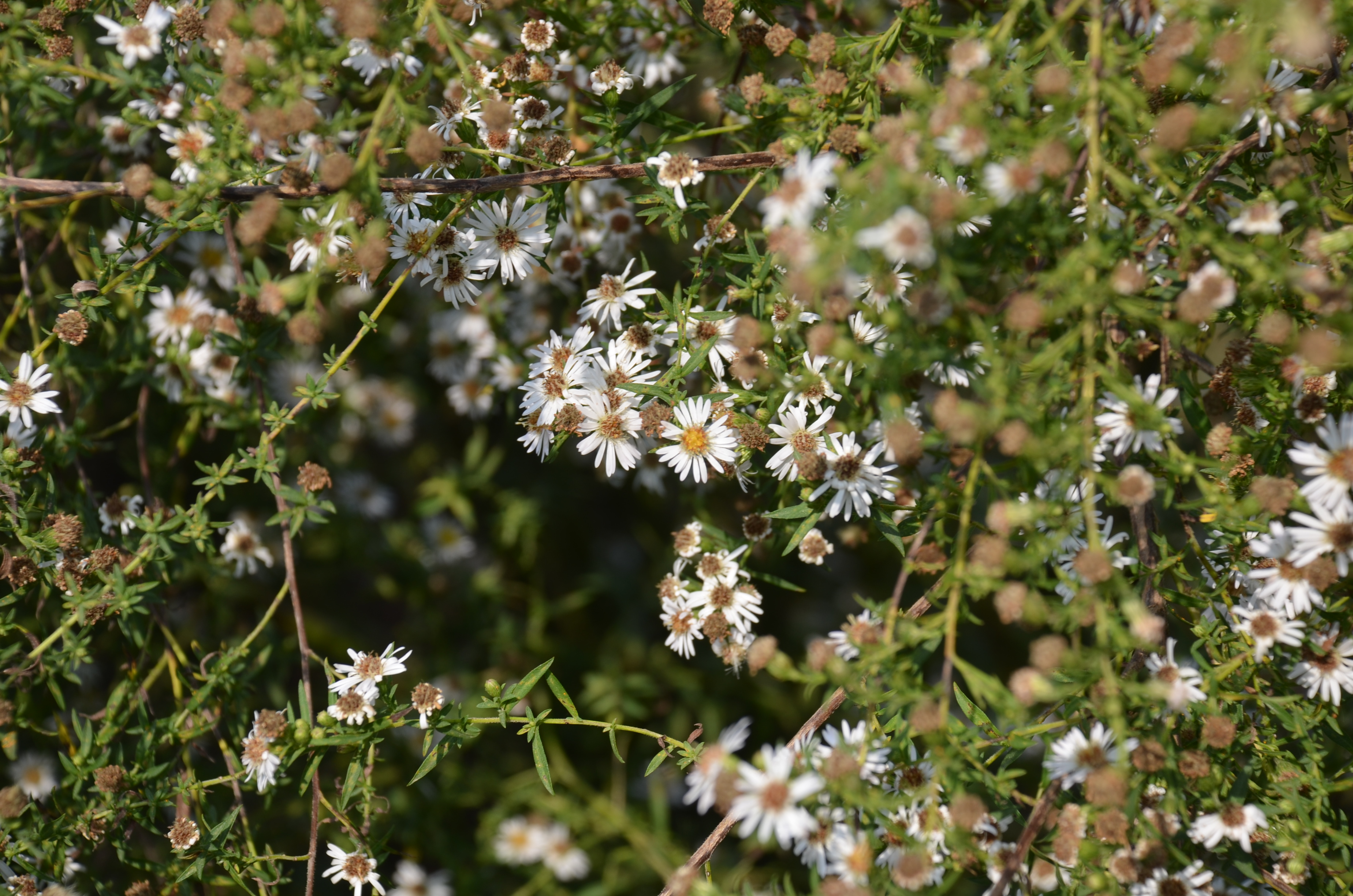 Hard Working Perennials For Your Late Summer Garden What Grows